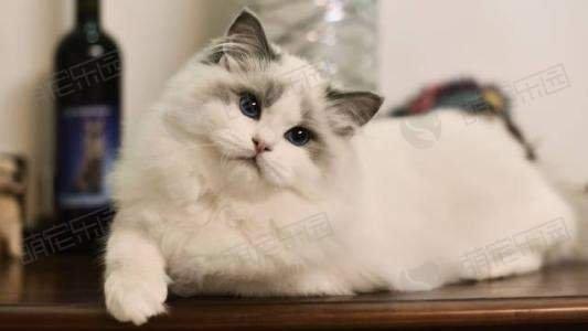 猫咪不愿意吃药怎么办?